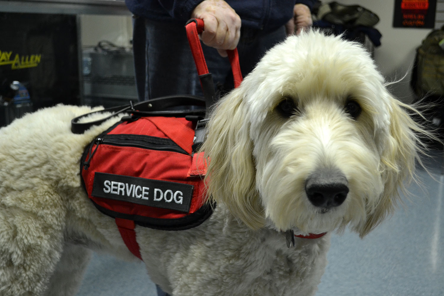 How To Get A Certification For A Service Dog