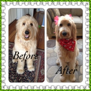 Sophiebefore and after groom